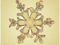 Cristaux de neige : étoile